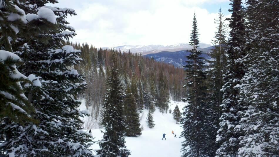 Breckenridge Ski Resort Trees