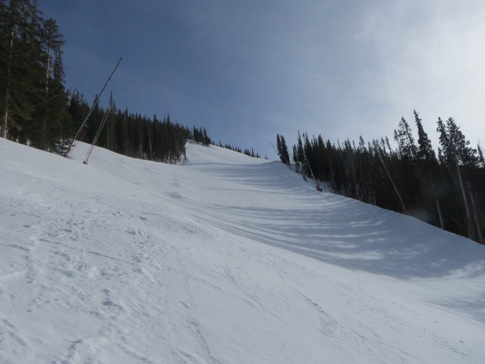 Looking Back Up Birds Of Prey