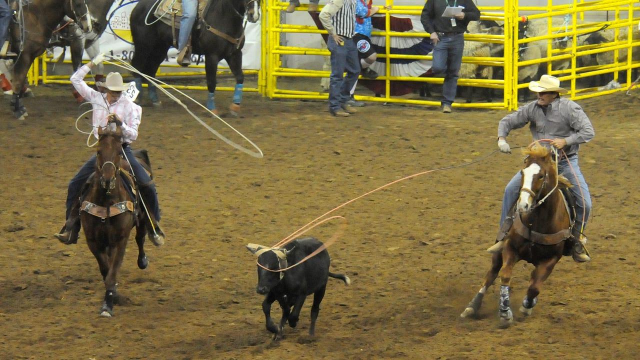 National Western Stock Show Roping Denver Colorado
