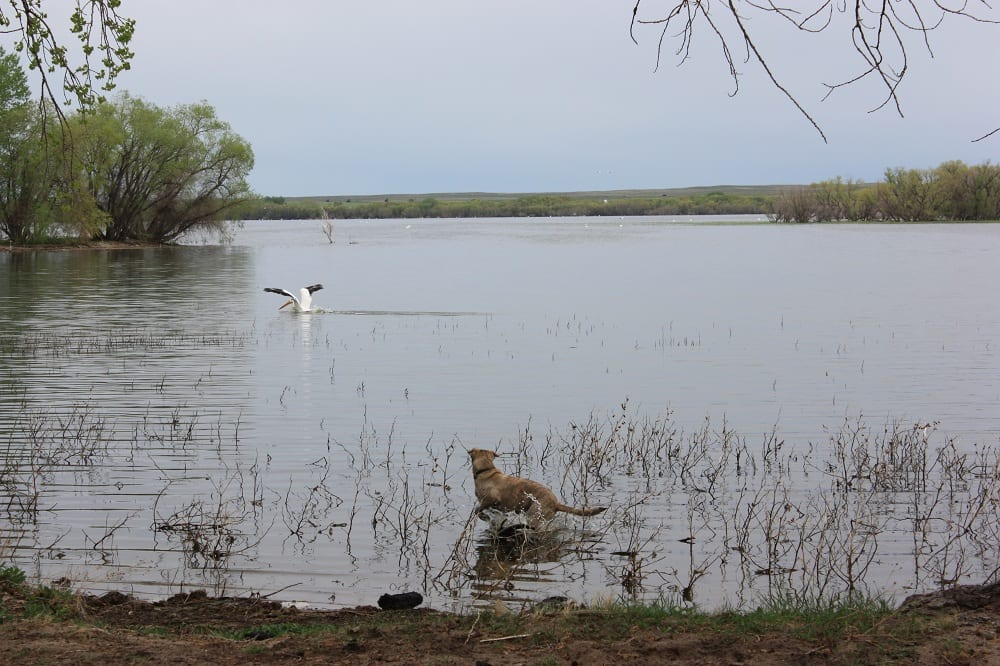 Prewitt reservoir state wildlife area colorado travel blog for Colorado fish and wildlife