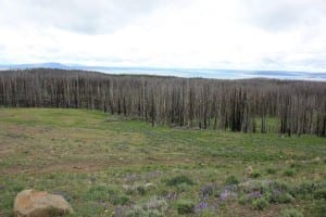 Yellowstone Lake Burned Forest