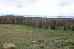 Yellowstone Lake Burned Forest