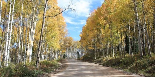 Kebler Pass Fall Colors