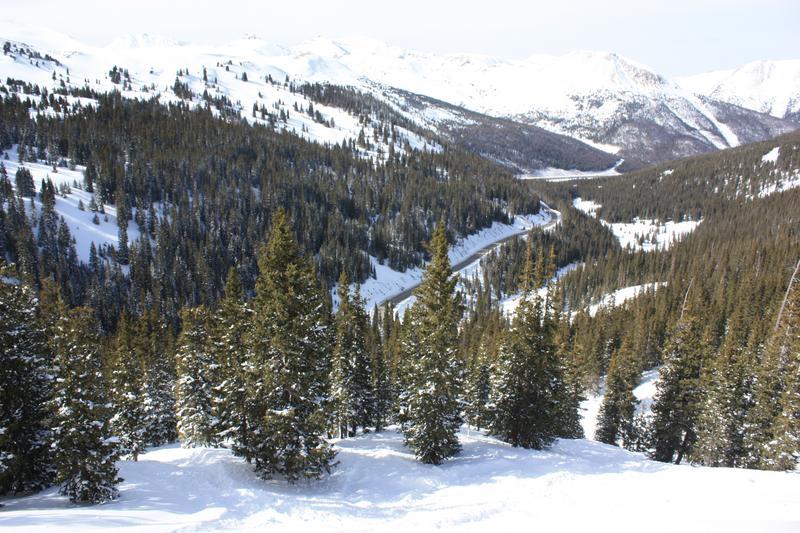 Loveland Pass Backcountry Tree Skiing