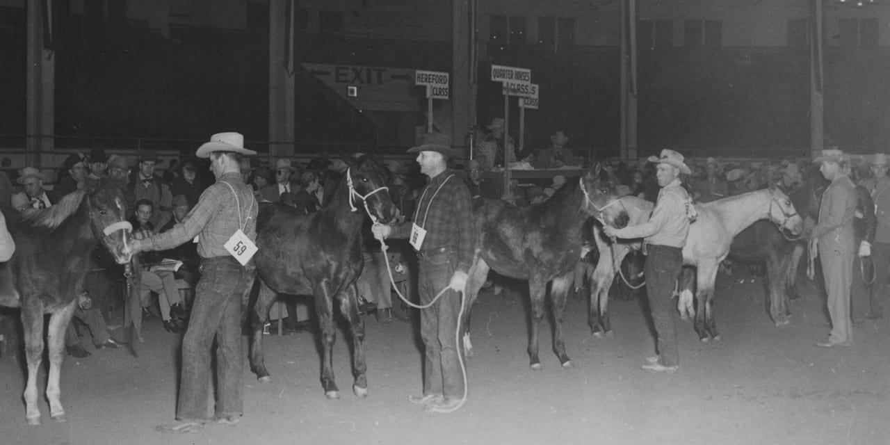 National Western Stock Show Quarter Horses