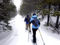 Colorado Snowshoeing