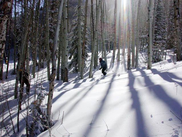 Sunlight Mountain Resort Trees