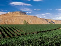 Colorado Winery Tours