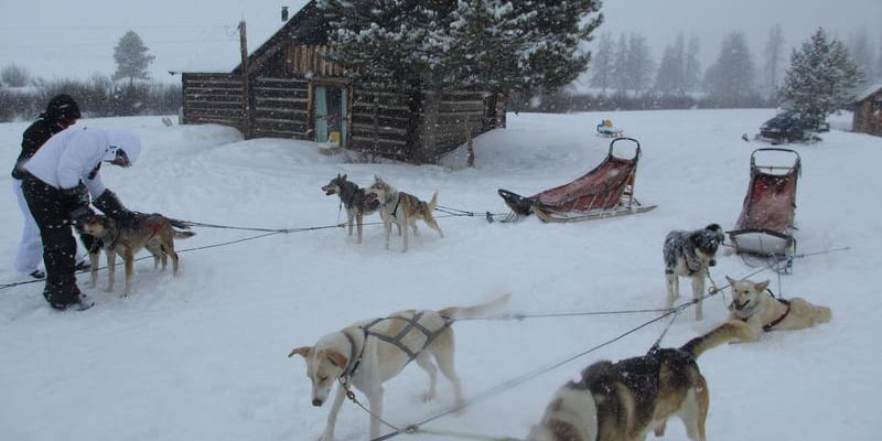 Grizzle-T Dog Sledding in Steamboat Springs | Colorado Travel Blog