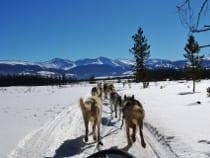 Dog Sled Rides Winter Park