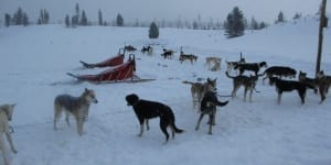 Dog Sledding Steamboat Springs CO