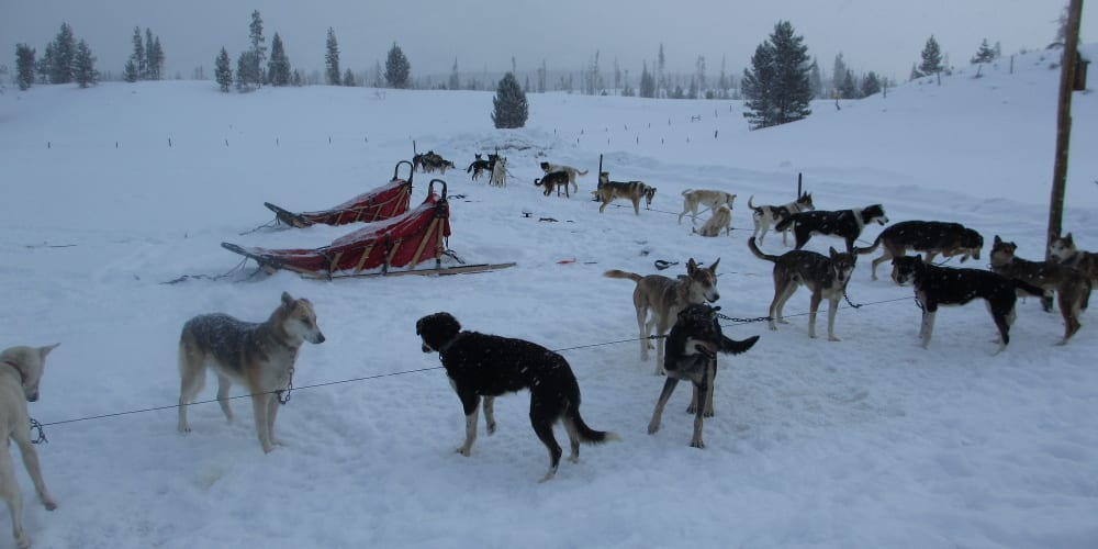 Dog Sledding Steamboat Springs CO