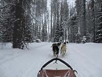Grizzle-T Dog Sled Works