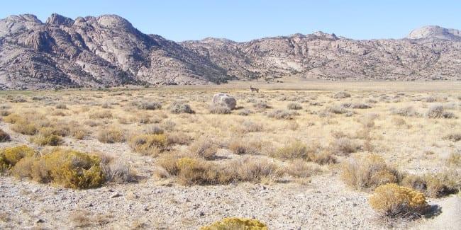 Hunting Western Colorado