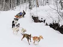 Krabloonik Dogsledding
