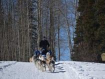Snow Buddy Dog Sled Tours Oak Creek