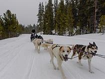 Winterhawk Dogsled Adventures