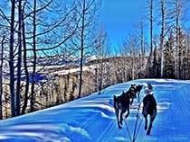 Wintermoon Sled Dog Adventures