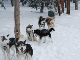 Dog Sled Tour 5 Mountain Pass Colorado