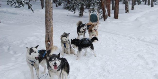 Dog Sled Tour 5 Mountain Pass Colorado