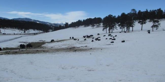 Buffalo Herd Nature Preserve