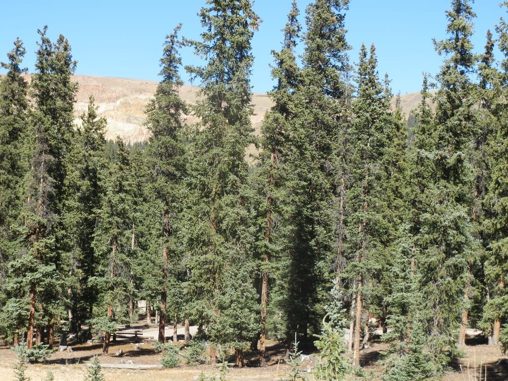 Slumgullion Campground Gunnison National Forest
