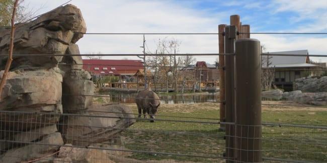 colorado wildlife wildlife attractions rescues sanctuaries and zoos in co. Black Bedroom Furniture Sets. Home Design Ideas