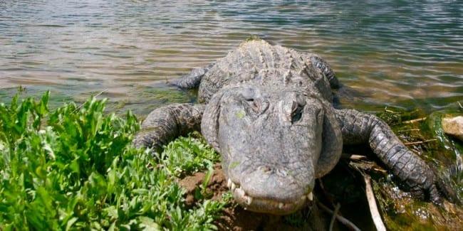 Colorado Gators Reptile Park