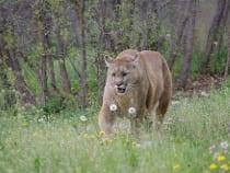 Rocky Mountain Wildlife Park