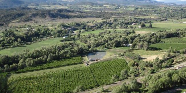 Vineyard Tour Western Colorado