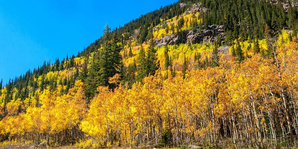 Guanella Pass Fall Colors