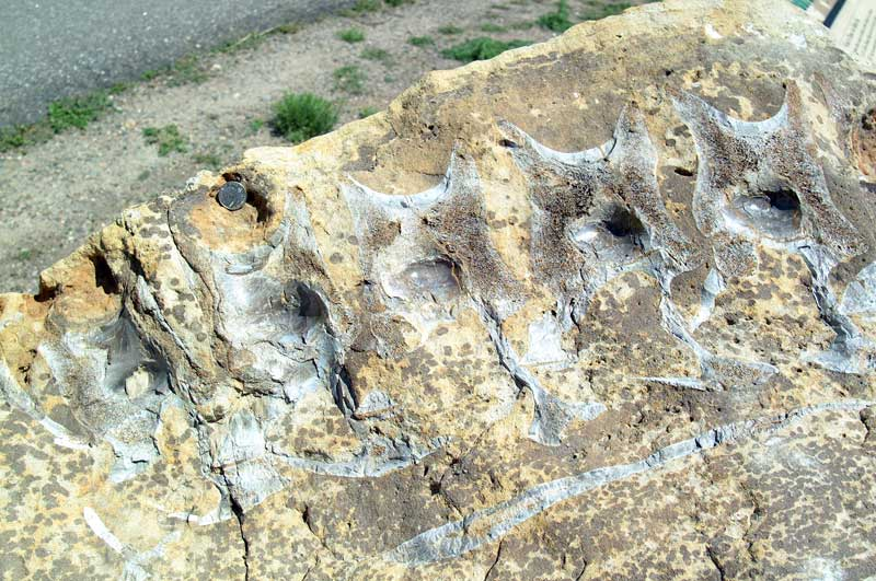 Dinosaur Ridge Allosaurus Bones