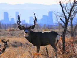 Rocky Mountain Arsenal Wildlife Refuge