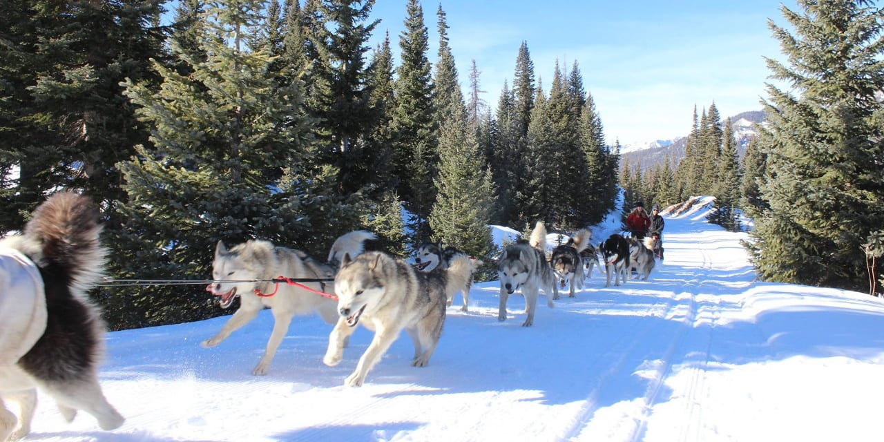 Pagosa Dogsled Adventures 12 Dog Tour