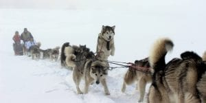 Pagosa Dogsled Adventures Winter Haze