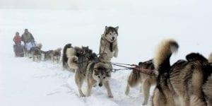 Pagosa Dogsled Adventures Winter Haze