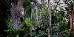 Denver Botanic Gardens Tropical Dome
