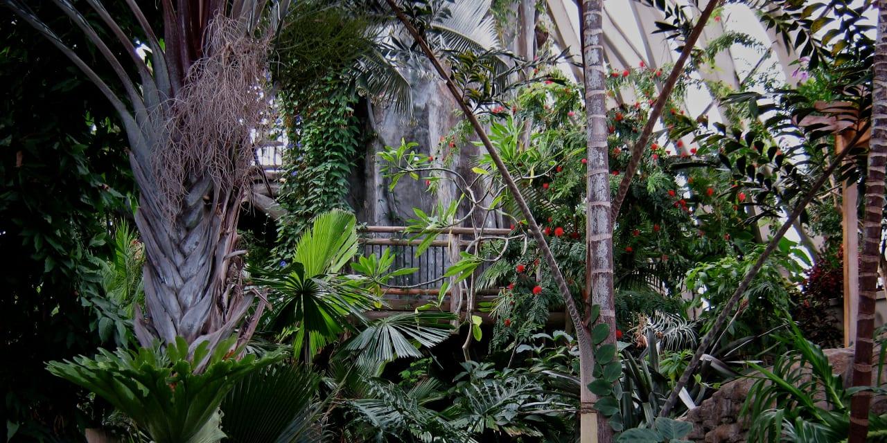 Denver Botanic Gardens Tropical Dome