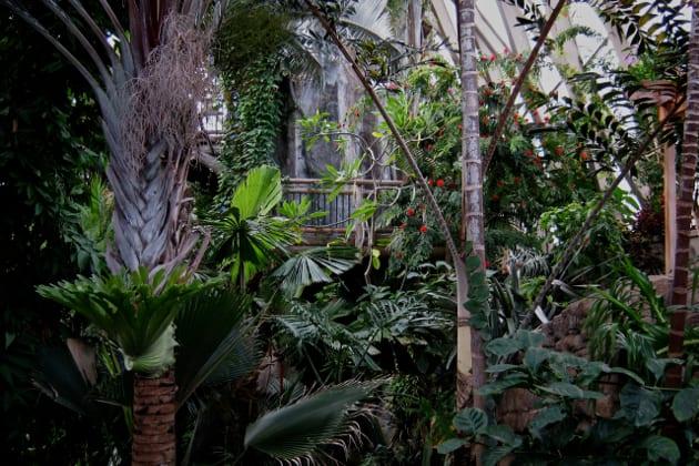 Denver Botanic Gardens Tropical Plants