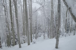 Steamboat Ski Resort Aspen Trees