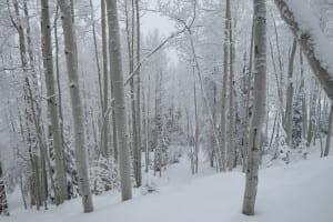Steamboat Ski Resort Aspen Trees