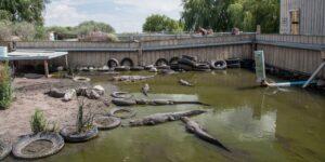 Colorado Gator Farm
