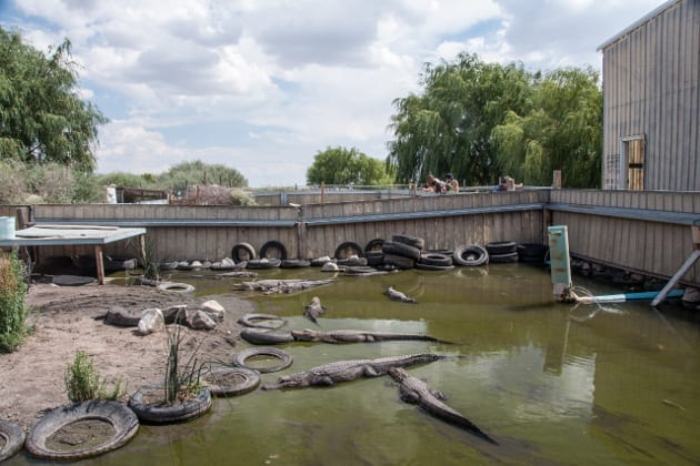 Colorado Gator Farm