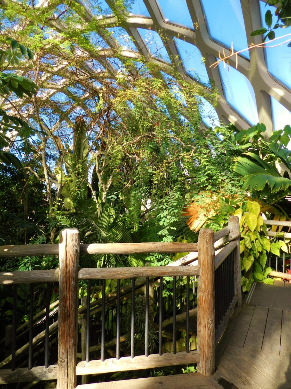 Tour Inside the Denver Botanic Gardens