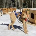 Durango Dog Ranch Dogs