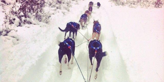 Durango Dog Ranch Purgatory