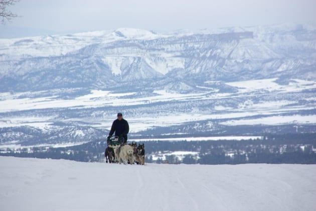 Durango Dog Sledding
