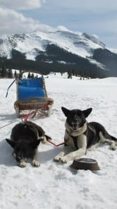 Durango Dog Ranch Sled