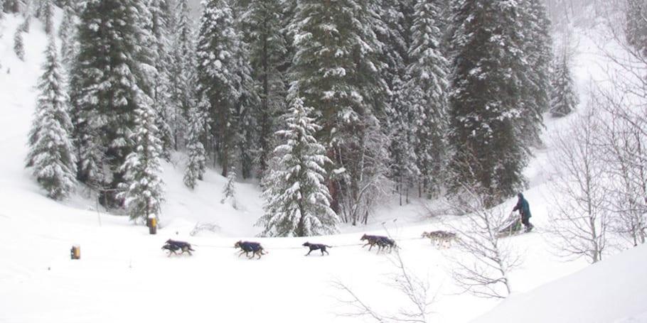 Durango Dog Ranch Sled Tour