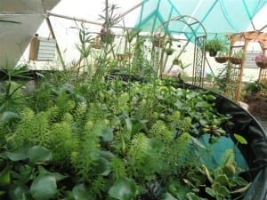 Growing Dome Solar Greenhouse Plants